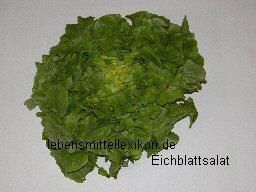 insalata da taglio insalata da taglio lollo rosso insalata foglia di